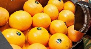 Ceny pomarańczy i jabłek spadają. Reszta owoców zdrożała. Najbardziej podskoczyły grejpfruty i banany